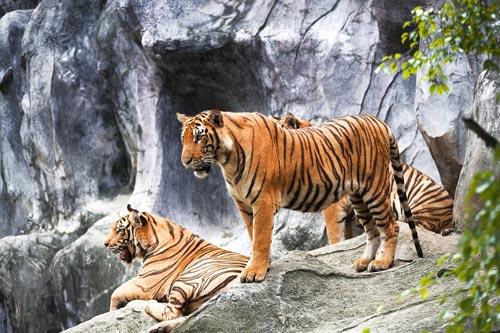 معروفترین و بزرگترین باغ وحش های جهان